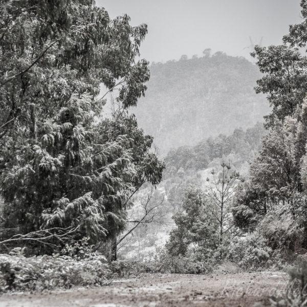 Snowfall, Brindabellas, 2017